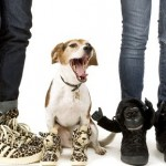 Jeremy Scott Already Hooked the Hipsters–Now He Wants… Pet-Lovers?