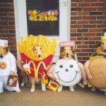Can You Guess How Much Pet Owners Will Spend on Halloween Costumes This Year?
