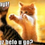 For All You Crazy Cat People…