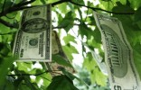 money-growing-on-tree-image-8