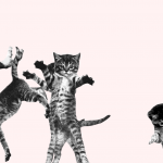 Stressed?! This Website Of Bouncing Cats Is Just For You