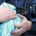 Your Daily Cute: Puppy Rescue Caught On Tape