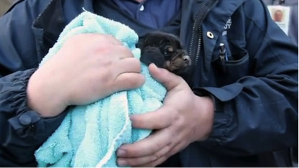 Puppy Trapped in Underground Pipe
