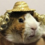 Guinea Pig Fashion To Hit The Runways Perhaps?