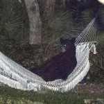 Bear Catches Up on R&R in Daytona Beach